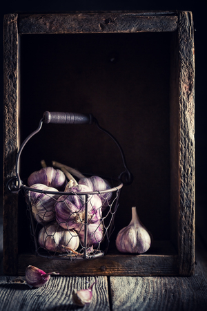 Homegrown rustic garlic in old wooden box