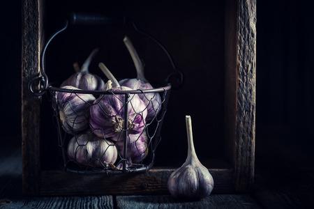 Homegrown rustic garlic in old metal basket