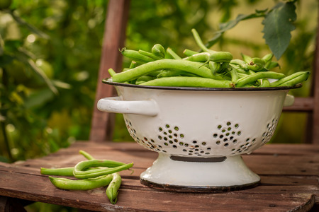 Healthy green beans in a colander in an old chair