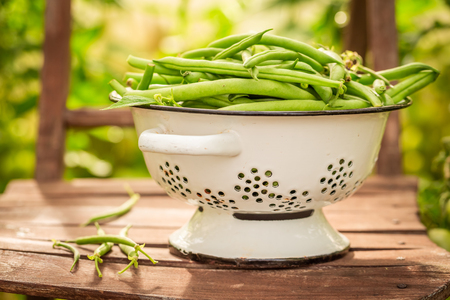 Fresh green beans in a small greenhouse