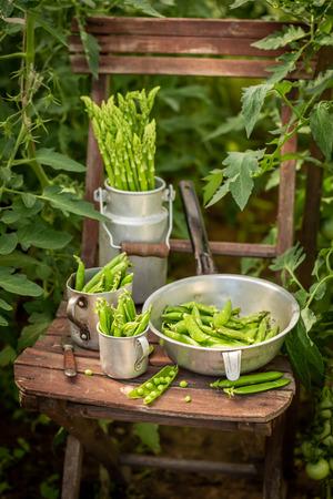 Fresh green peas in an old aluminum pot Stock Photo