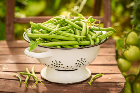 Healthy green beans in a small greenhouse Stock Photo