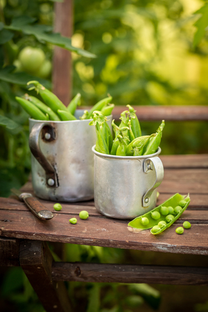Fresh green peas on old wooden summer chair Stock Photo