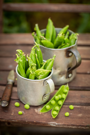 Healthy green peas in an old aluminum pot
