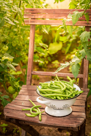 Raw green beans in a colander on an old chair