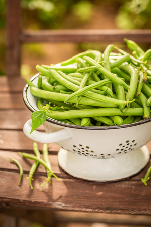 Closeup of green beans in a small greenhouse