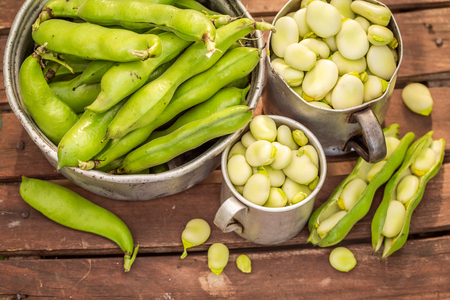 Healthy broad beans in a small greenhouse
