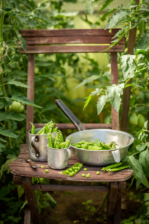 Tasty green peas on old wooden summer chair Stock Photo