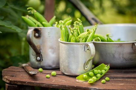 Closeup of green peas in an old aluminum pot