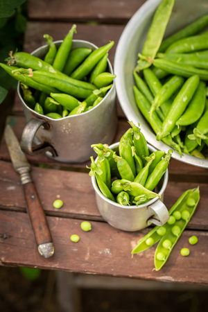 Harvested green peas on old wooden summer chair Stock Photo