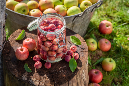 Preparation for canned apples in the jar in summer