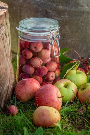 Homemade canned apples in the summer garden Stok Fotoğraf