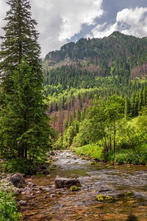 Stream and trees in Koscieliska valley, Tatra Mountains