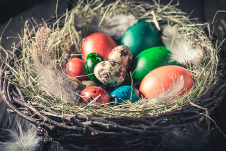 Colourfull Easter eggs on hay with feathers