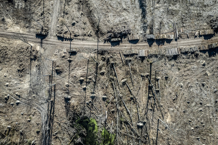 Aerial view of terrible deforestation, logging, environmental destruction, Europe