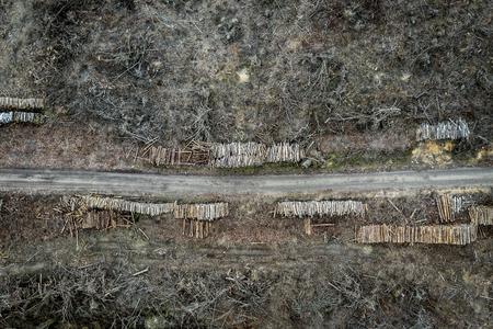 Flying above horrible deforestation, destroyed forest for harvesting, Poland