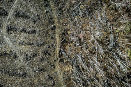 Aerial view of horrible deforestation, logging, environmental destruction, Poland Stock fotó