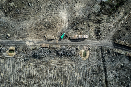 Aerial view of horrible deforestation. harvesting a forest, Poland