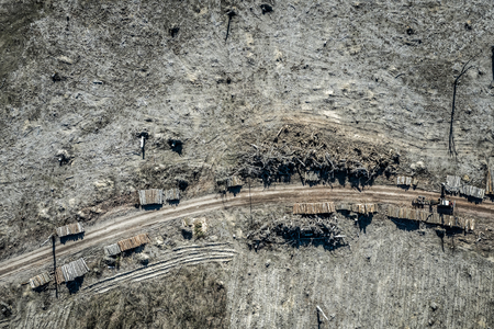 Aerial view of horrible deforestation, destroyed forest for harvesting, Poland 写真素材