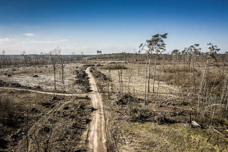 Aerial view of terrible deforestation, logging, environmental destruction, Poland Archivio Fotografico