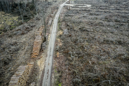 Aerial view of terrible deforestation, destroyed forest for harvesting, Poland