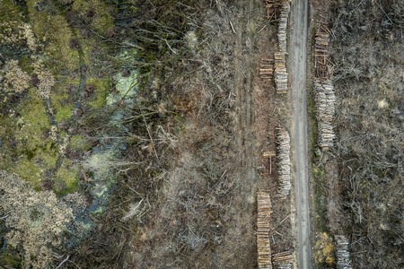 Aerial view of terrible deforestation, destroyed forest for harvesting, Europe