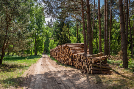 Large amount of cut wood after the storm in Poland Banco de Imagens