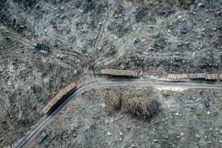 Aerial view of terrible deforestation forest for harvesting, Europe
