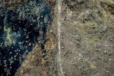 Flying above terrible deforestation forest for harvesting, Poland