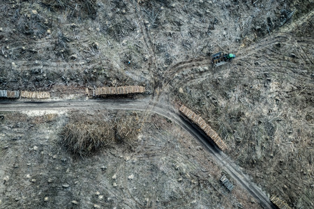 Aerial view of shocking deforestation, destroyed forest, Poland Stock fotó