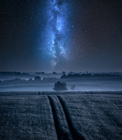 Filed with one tree in summer and milky way Stock fotó