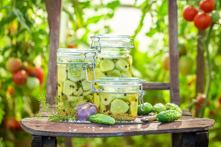 Closeup of pickled cucumbers in small greenhouse Zdjęcie Seryjne