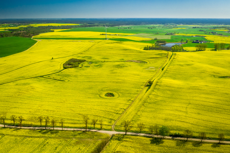 Flying above yellow rape fields and wind turbine in Poland