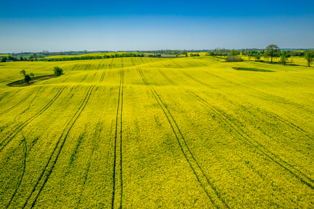 Green and yellow rape fields in sunny day, aerial view