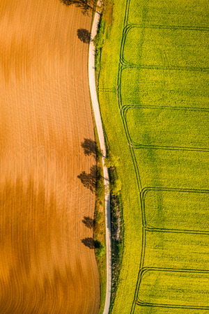 Green and yellow rape fields in the countryside, aerial view Reklamní fotografie