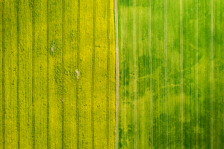 Yellow and green rape fields in the spring, aerial view Reklamní fotografie