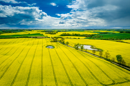 Yellow rape fields in cloudy day, aerial view in Poland Standard-Bild - 122087060