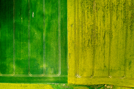 Green and yellow rape fields in Poland, aerial view Reklamní fotografie