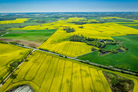 Green and yellow rape fields in the spring, aerial view