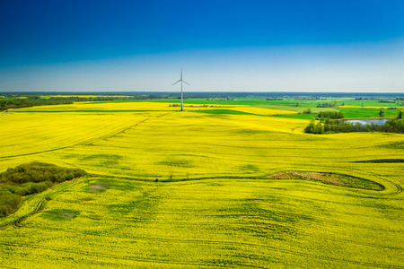 Flying above green rape fields and wind turbine in Poland