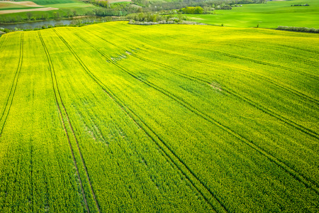 Yellow rape fields in the summer, aerial view