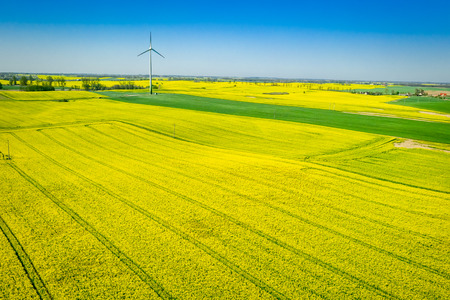 Green rape fields and wind turbine, aerial view