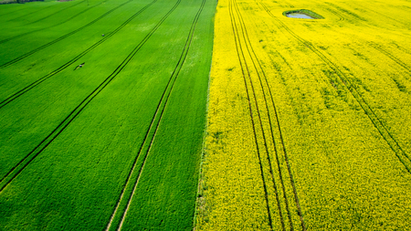 Yellow and green rape fields in Poland, aerial view Reklamní fotografie
