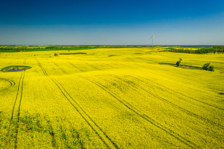Yellow and green rape fields in sunny day, aerial view