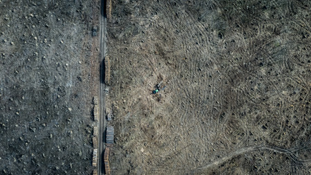 Aerial view of shocking deforestation, destroyed forest in Europe