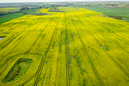 Flying above yellow and green rape fields in Poland Reklamní fotografie