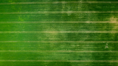 Big green field with tractor trails, aerial view