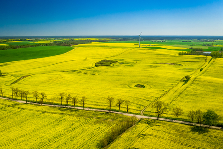 Green rape fields and wind turbine in the spring