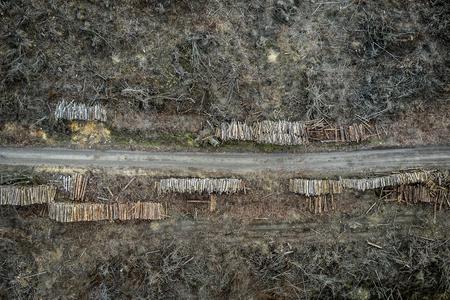 Flying above terrible deforestation, destroyed forest for harvesting