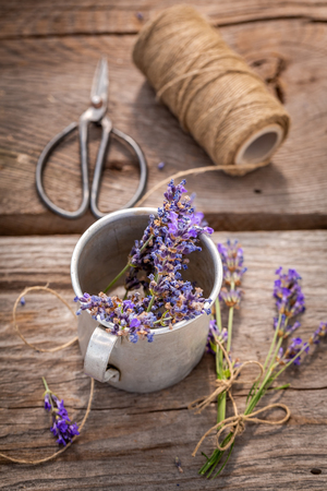 Fresh lavender preparation for home drying in summer Imagens